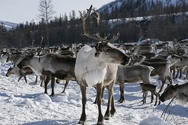 Gemstones & Glaciers: The Treasures of Yakutsk