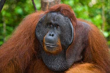 Wild Borneo: Kota Kinabalu to the Danum Valley