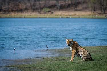 A Naturalist's Trip Through the National Parks of Madhya Pradesh