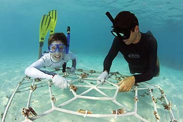 Marine Conservation in the Maldives