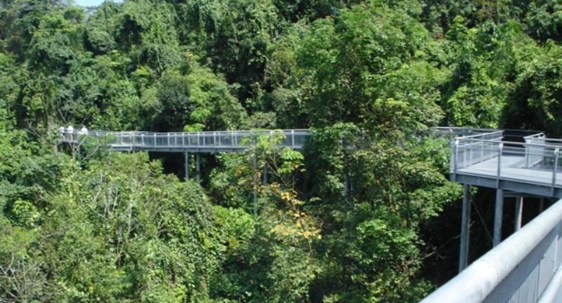 Canopy Walk at Southern Ridges