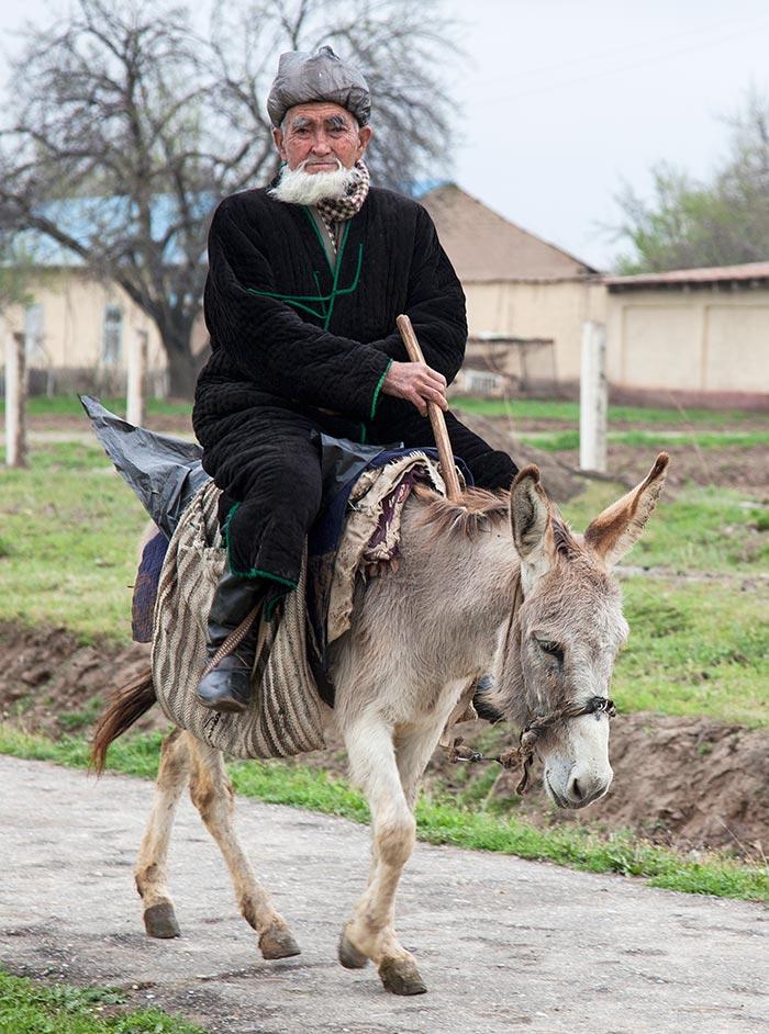 An old man traveling by donkey near Qarshi.