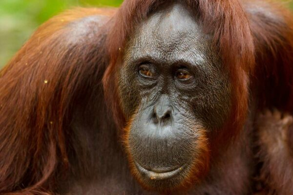 Welcome to the Jungle: Adventures in Borneo