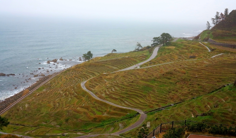 Noto's cliffside rice terraces are a spectacular sight