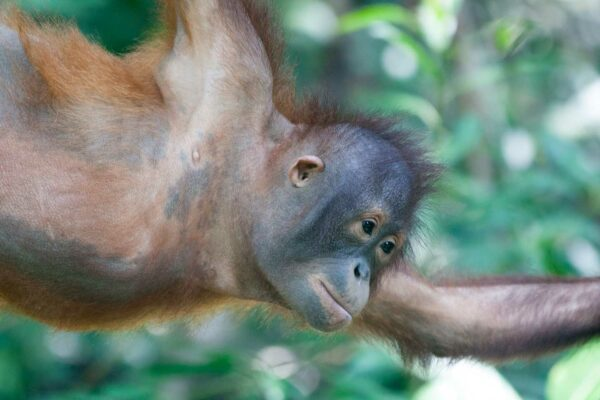 A Walk on the Wild Side: The Jungles of Sabah