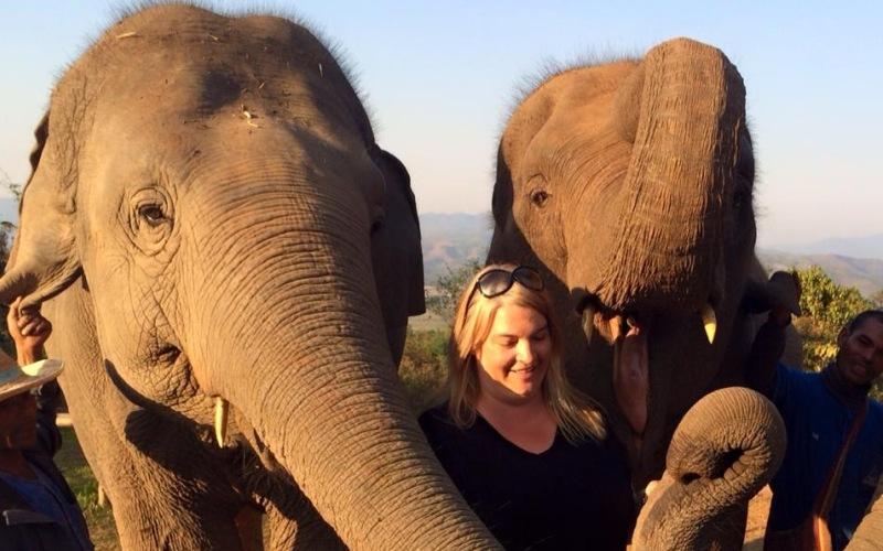 Empathising with elephants