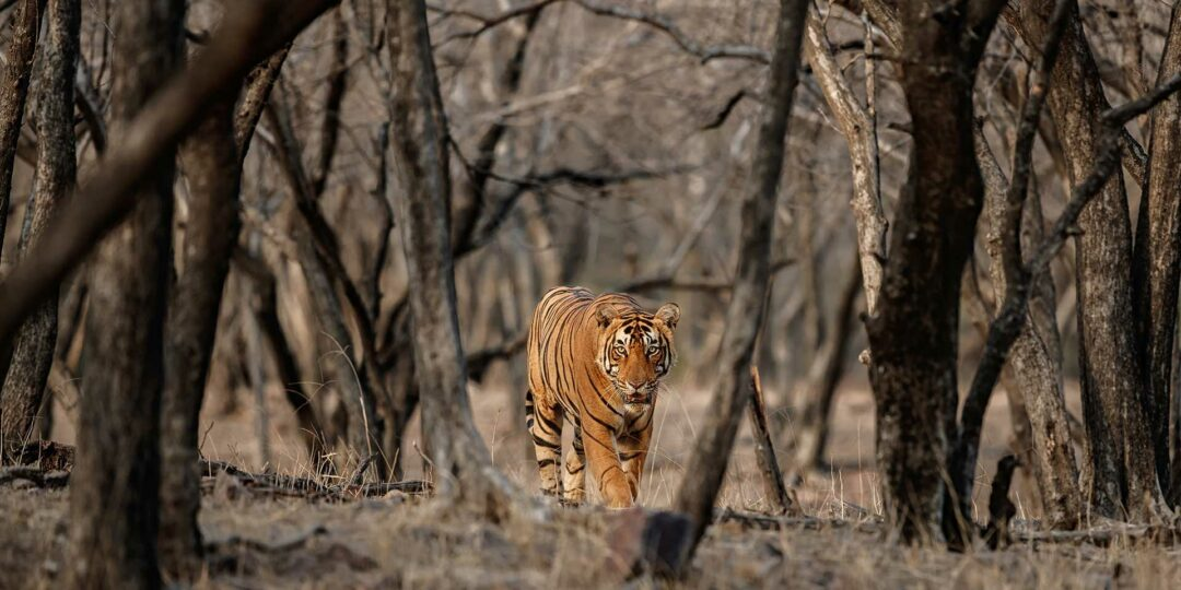 Amazing Wildlife Experiences in India