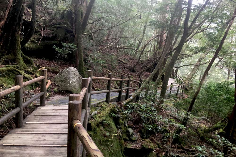 Hiking in Yakushima