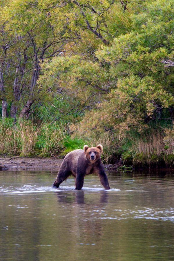 Bear_1-600x900