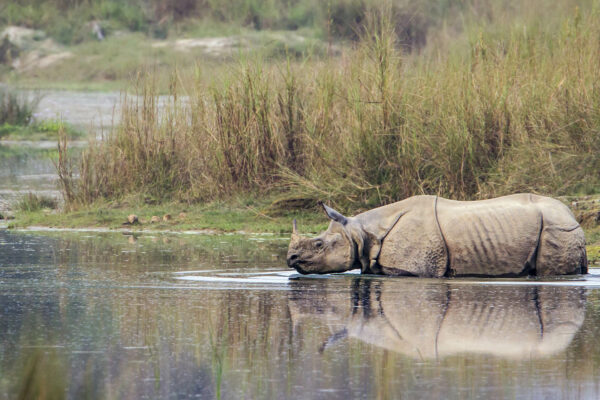 Nepal's Bardia: Trekking with Tigers and Rafting with Rhinos