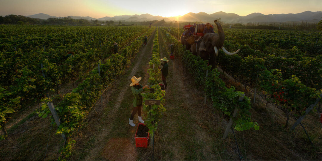 5 Must-See Vineyards in Southeast Asia