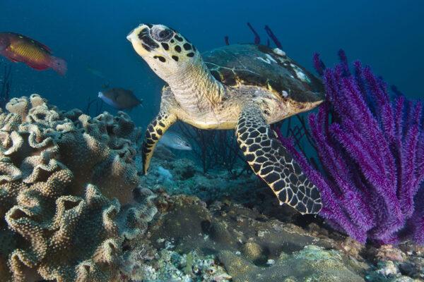 3 Easy-to-Do Wildlife Adventures in Oman