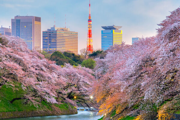 When to See Japan's Cherry Blossoms and Where to Stay