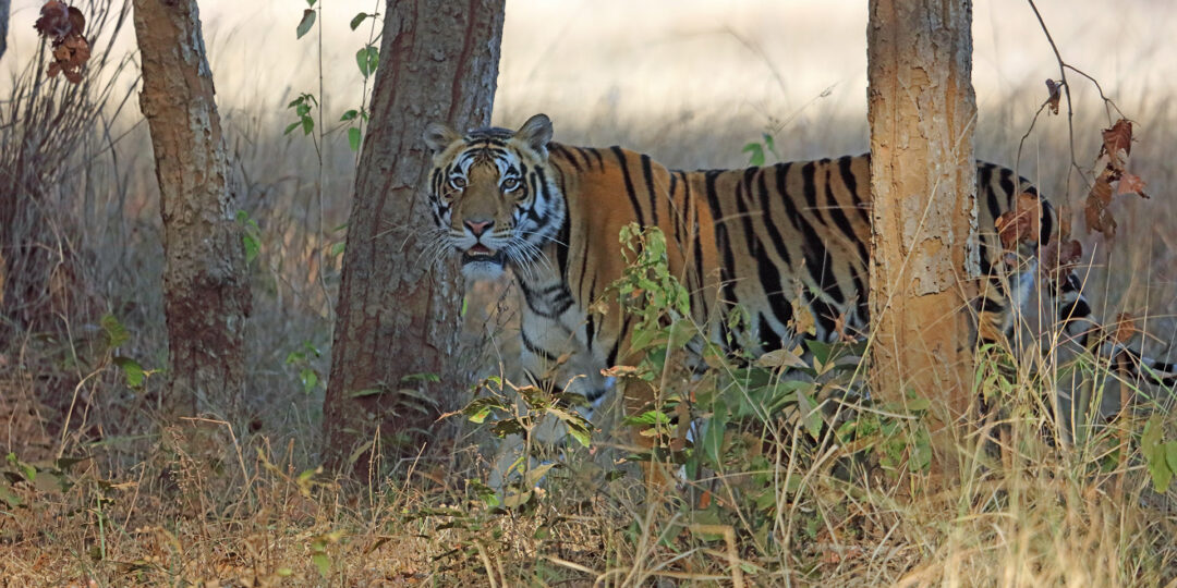 3 Things you Don't Want to Miss in India's Kanha