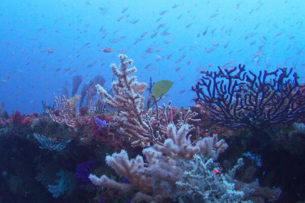 Chinsen: Diving Japan's Atami Wreck off the Izu Peninsula.