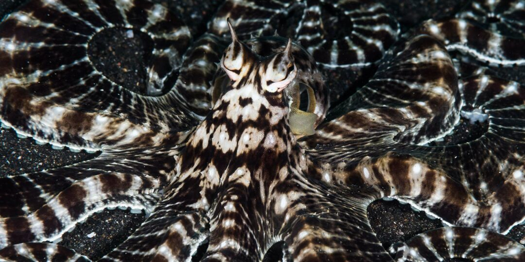 Lembeh: Muck Diving for the Luxury Traveler