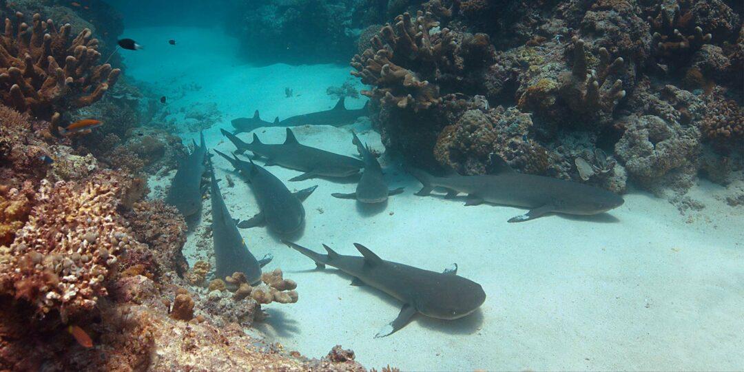 Sharks and Exclusive Underwater Adventures in Tubbataha
