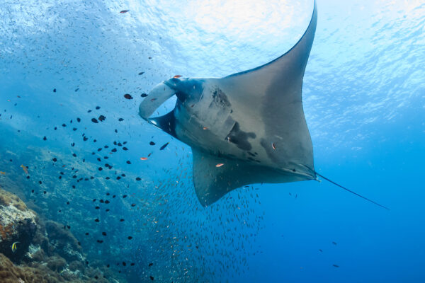 Diving Mergui and the Burma Banks