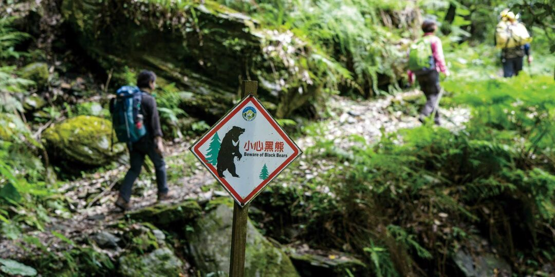 Searching for the Formosan Black Bears of Taiwan's Yushan National Park