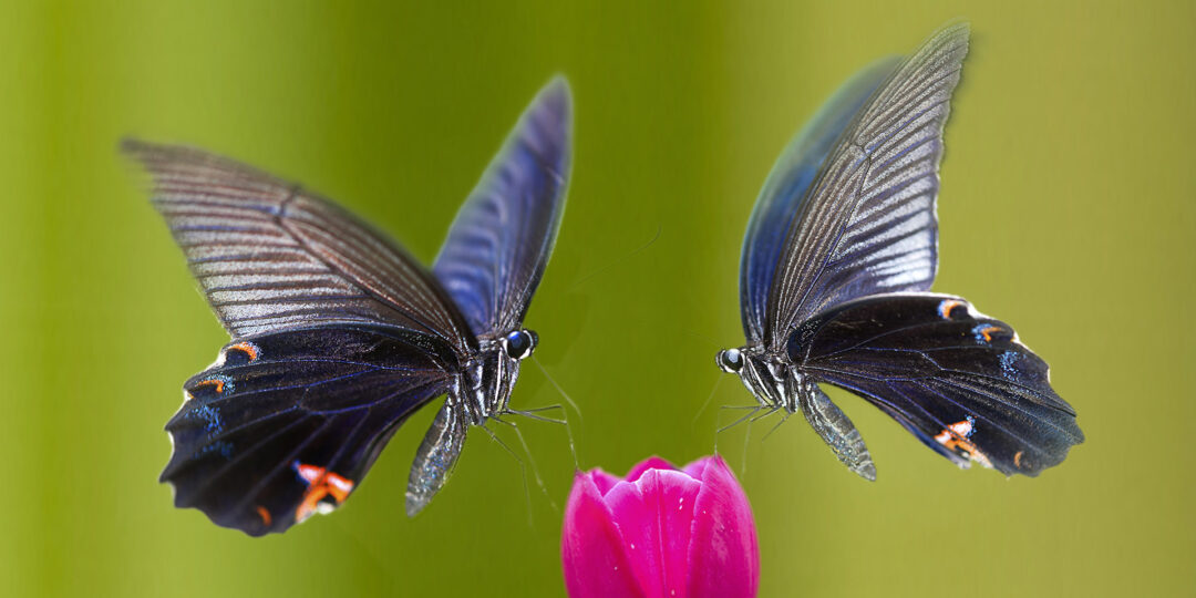 The Subtle Butterfly Migrations of Taiwan