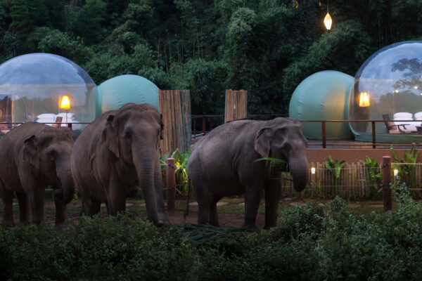 Jungle Bubbles Open at Anantara Golden Triangle Elephant Camp