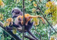 Wild Langkawi: Mangroves, Monkeys, Eagles, and Sharks
