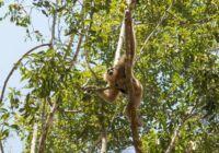 Wildlife Thrives at Angkor Wat