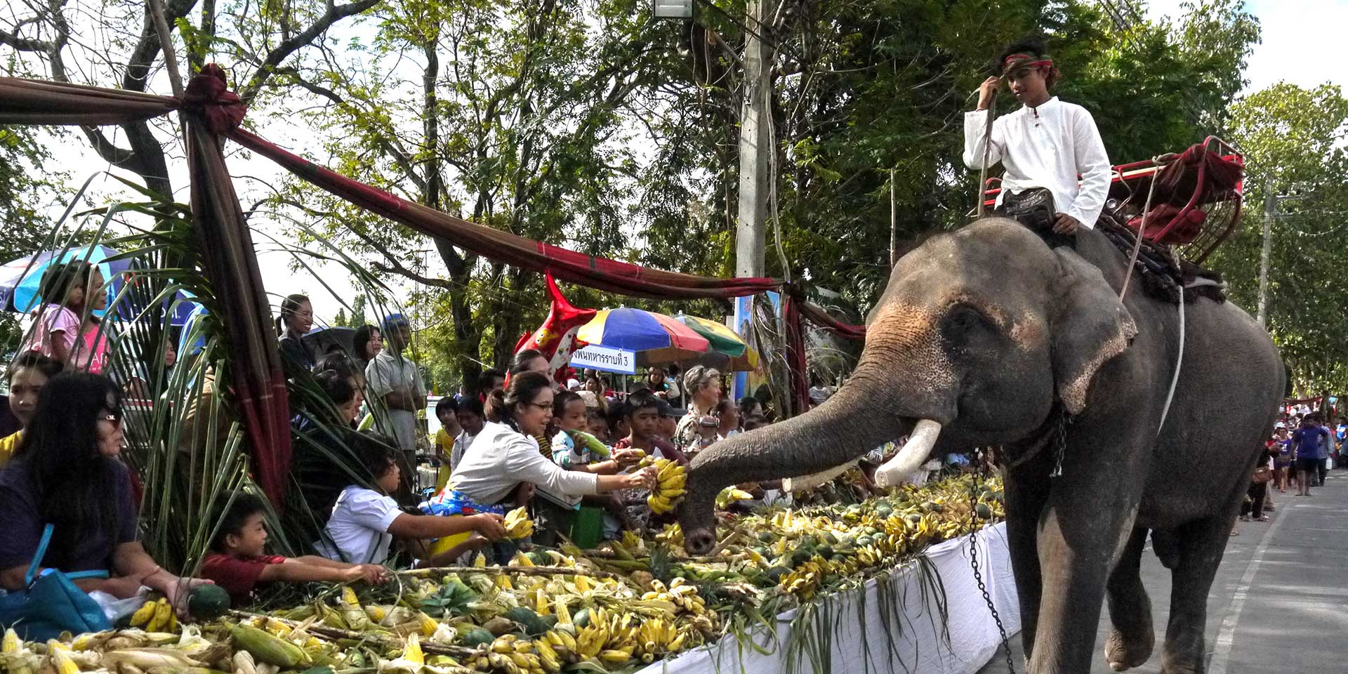 Surin elephant round up travelogues from remote lands the national symbol of thailand the elephant is in great danger there are only about 1500 elephants living in the wild and 3000 left in thailand buycottarizona Images