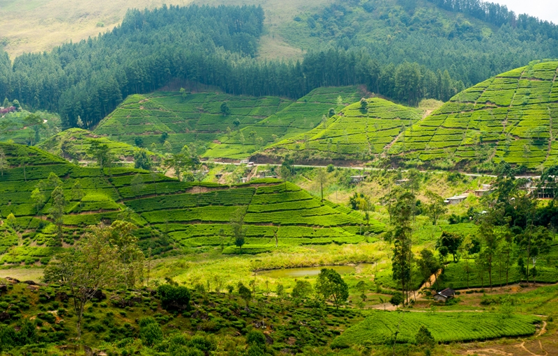 Stunning views at Nuwara Eliya, Sri Lanka