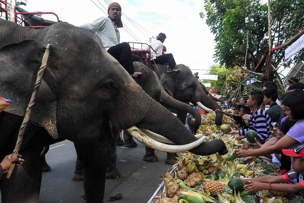 Il festival degli elefanti a Surin