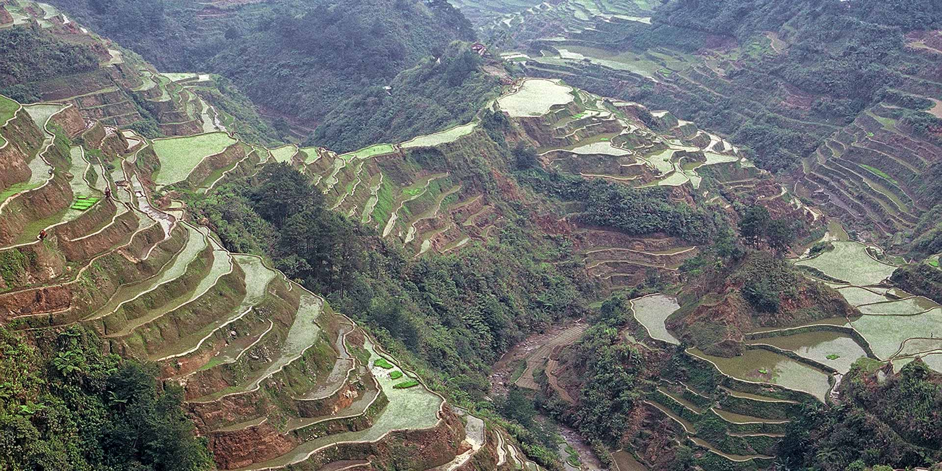 Gods of Rice: Banaue Terraces Are Out of This World