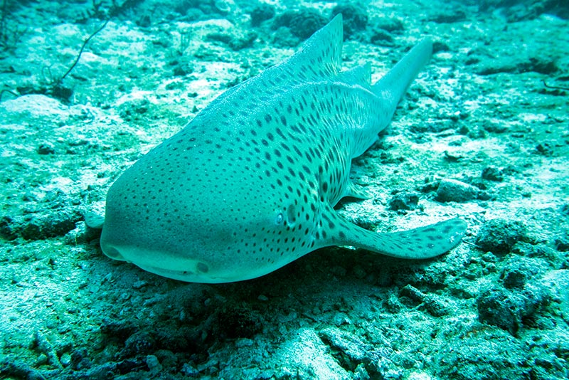 One of my favorite discoveries was a Leopard Shark.