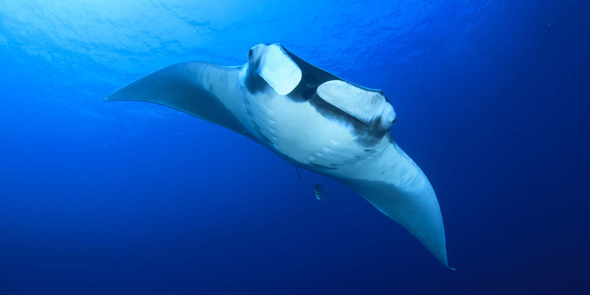 Searching for Manta Rays in the Similan Islands