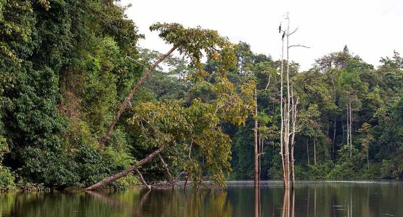 Kinabatangan River, Malaysian Borneo
