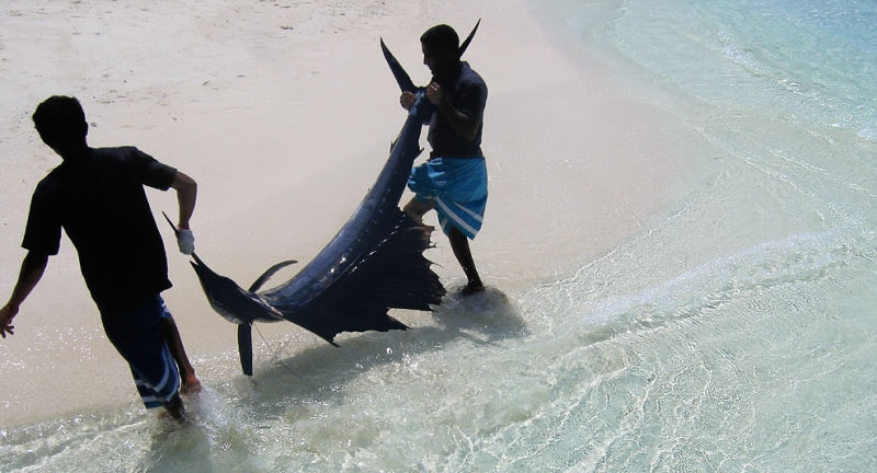 Maldivian waters are teeming with fish