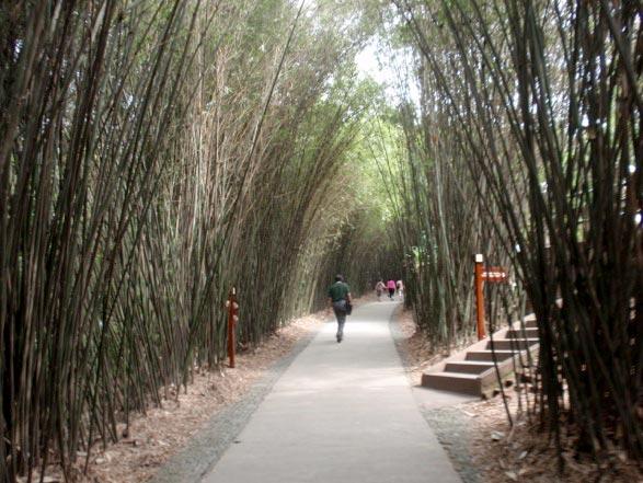 Bamboo walkway.