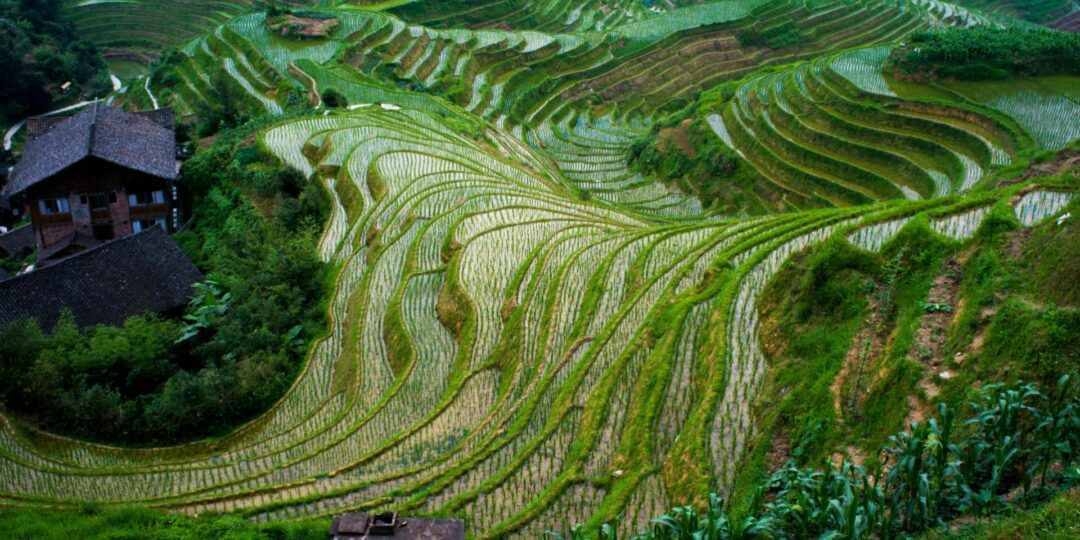 A Room with a View: China's Longsheng Rice Terraces