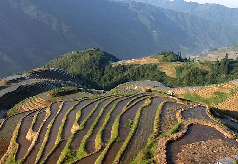 The rice terraces of Longsheng.