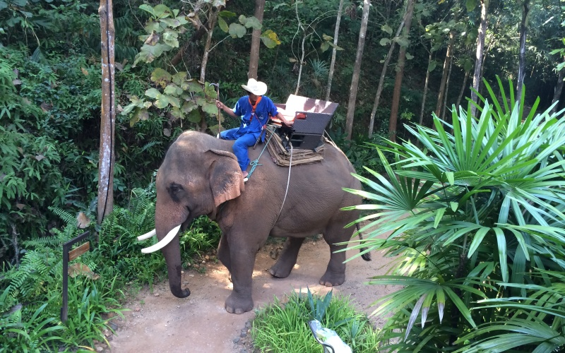 My elephant takes his leave - while I enjoy some Thai wine