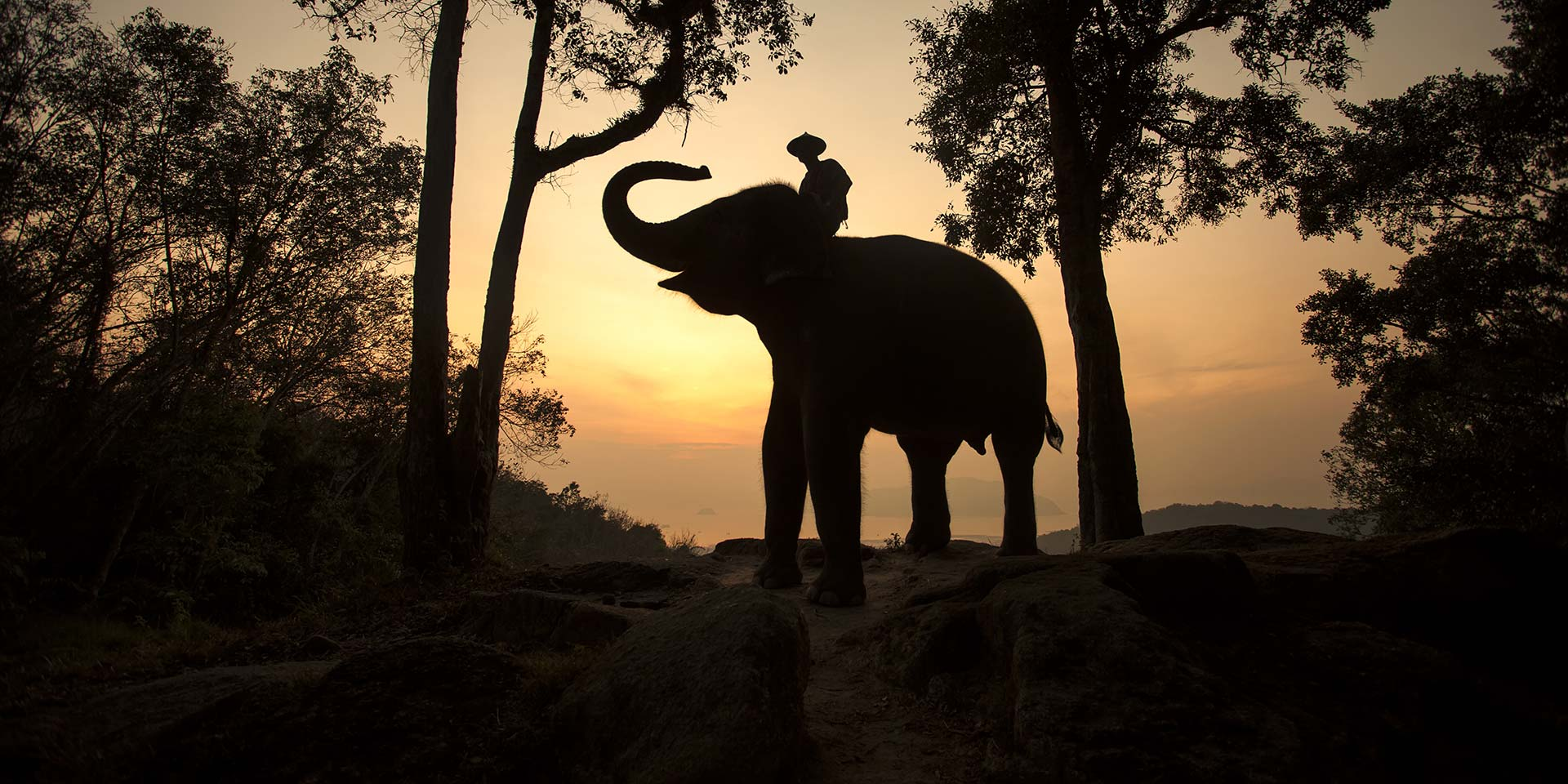 Elephants in the Room: Conservation in Chiang Rai