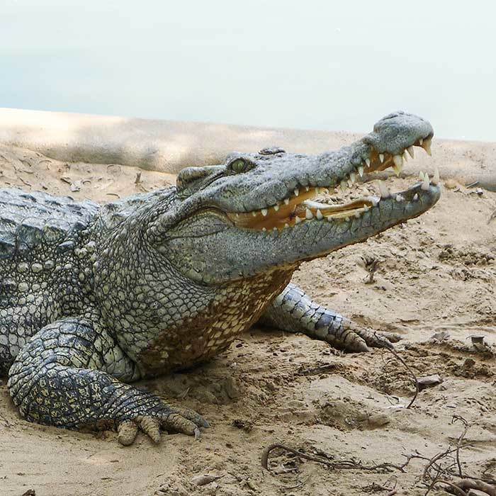 Croc_4-700x700
