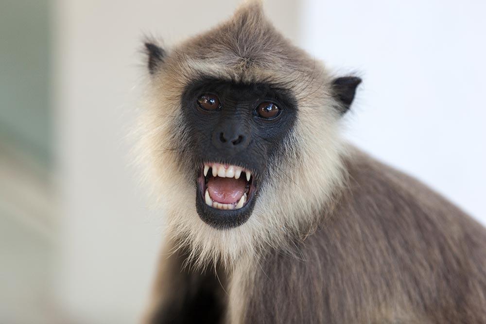 There were more monkeys at Anuradhapura than tourists.