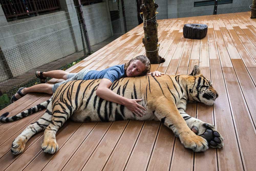 Tiger Kingdom, Chiang Mai