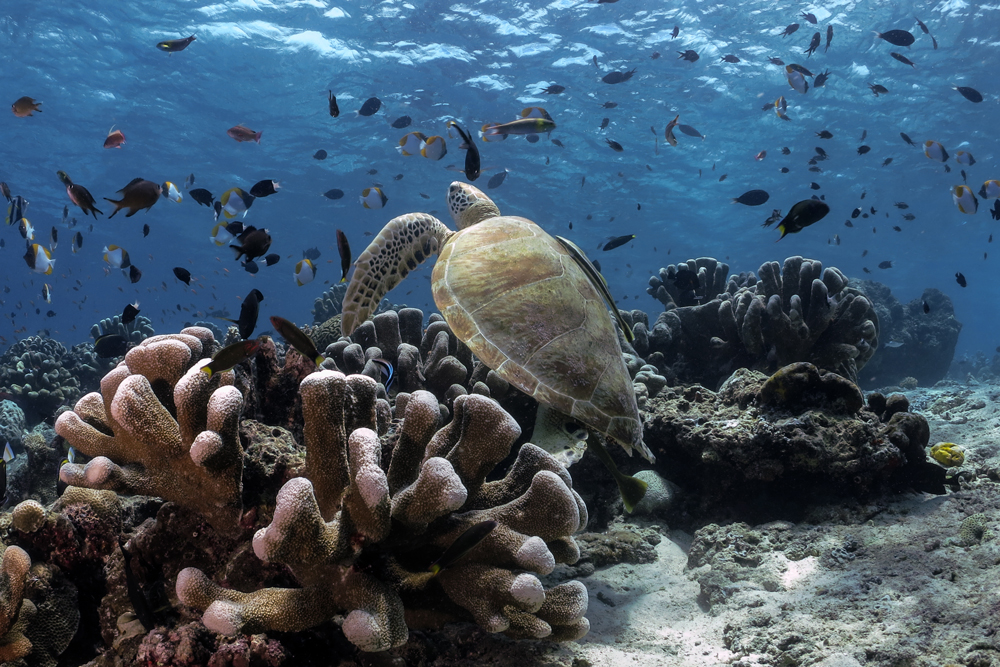 Underwater panorama of Sipadan Island
