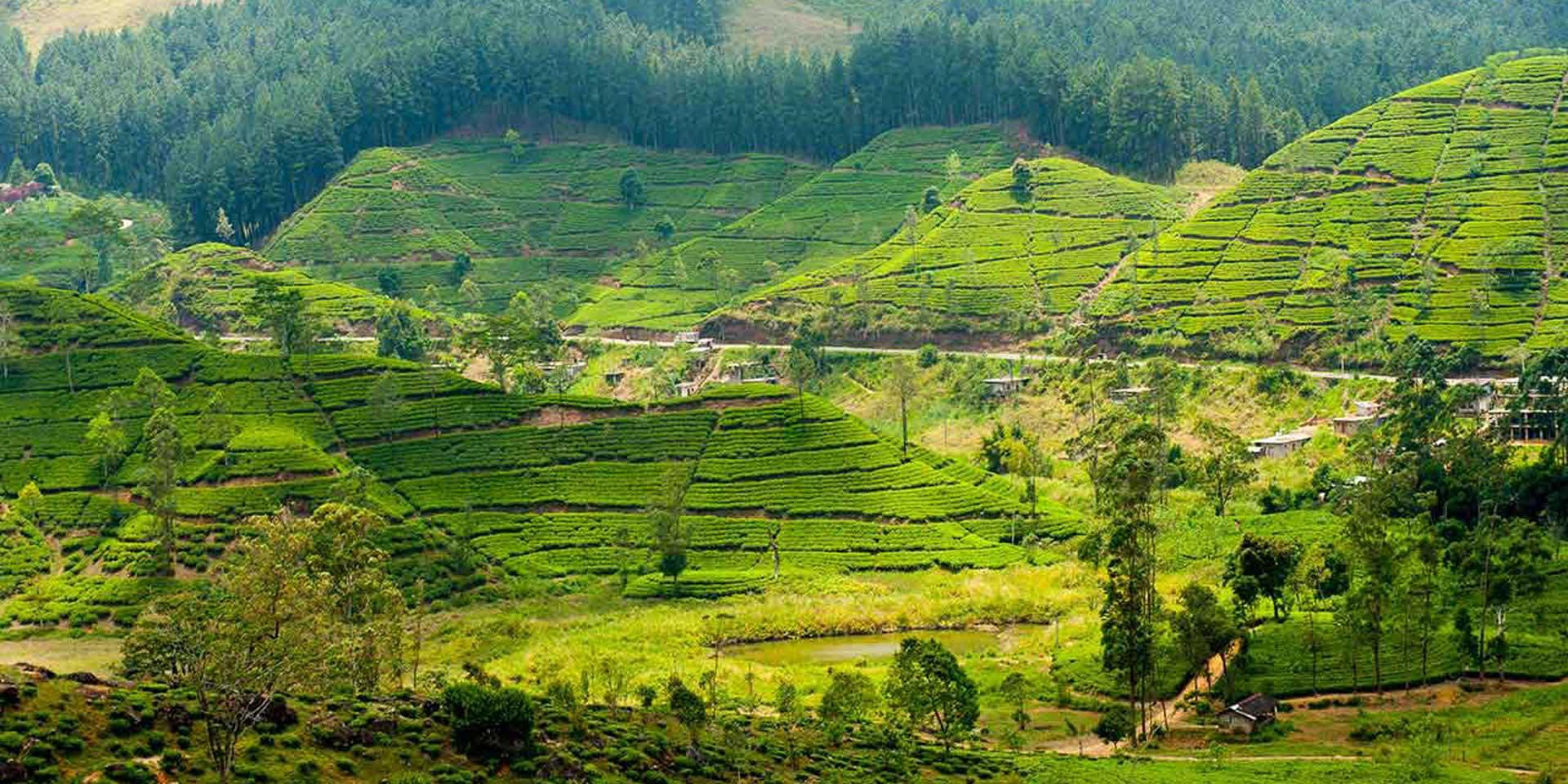 A Luxurious Comeback for Sri Lanka