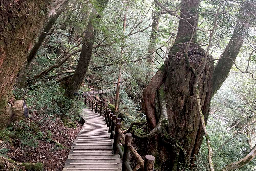 The island is covered with fantastic hiking trails