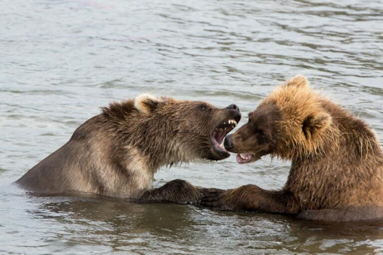 Bear_2-1024x683