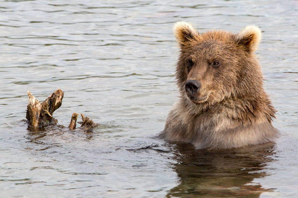 Bear_3-1024x682