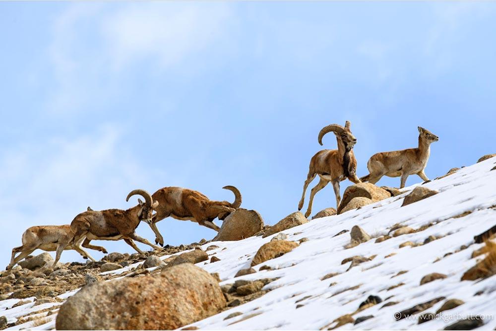 Ladakh_7