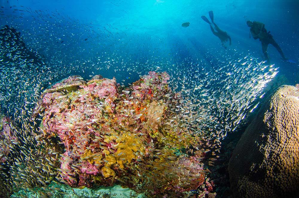 Mergui-diving